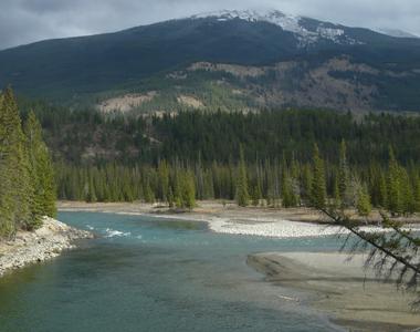 Habitat, mountain, alpine stream