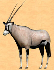 Oryx panorama