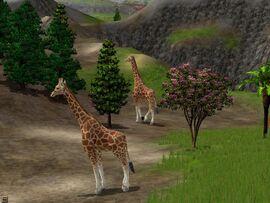 Wildlifepark2 08
