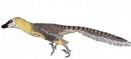 VelociraptorInfobox