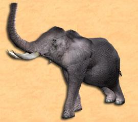 File:Tier elefant.jpg