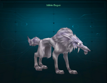 White Dagun pet