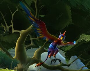 Colorful bird WS