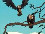 Eager Vultures