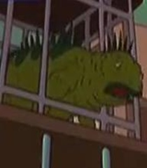 Archivo:Iguana.jpg