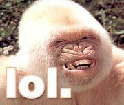 Ape lol