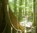 Western Rainforest