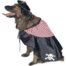 Pirate-dog-300x300