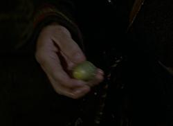 Magic acorn