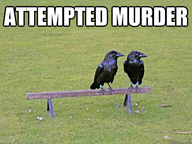 Attempted Murder Crows