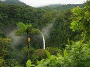 Rainforest-800x600-desktopia.net