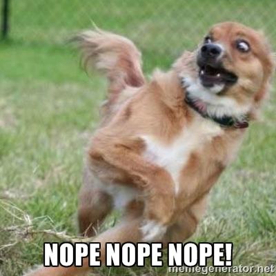 Terrified Dog Meme