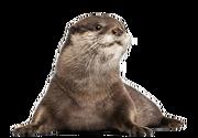 OtterP