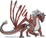 Shrike dragonet peregrinecella