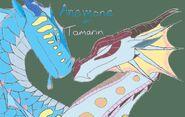 Anemone and Tamarin