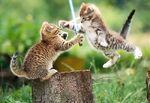 Jedi-cat-fight