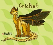 Cricket by nochtliproductions-dcgevhv