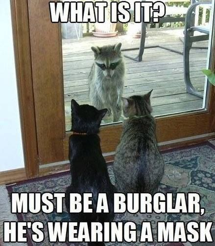 Top Funny Animal Memes And Quotes Animals Jpg