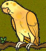 Żółtapapuga