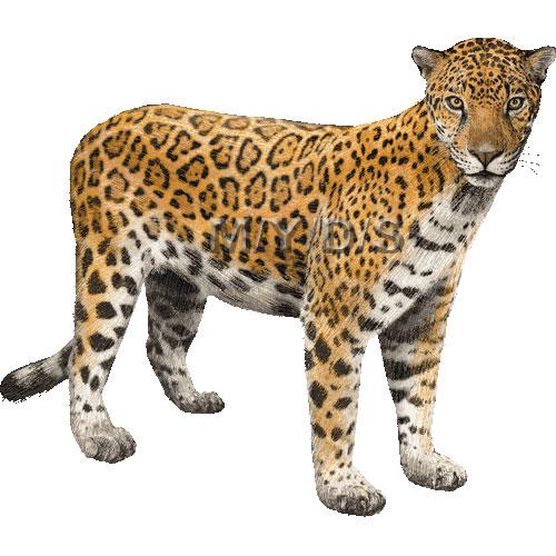 Image - Jaguar Clipart 33867.jpg