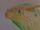 Gecko le sandwing