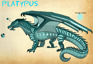 Platypus by Seashell