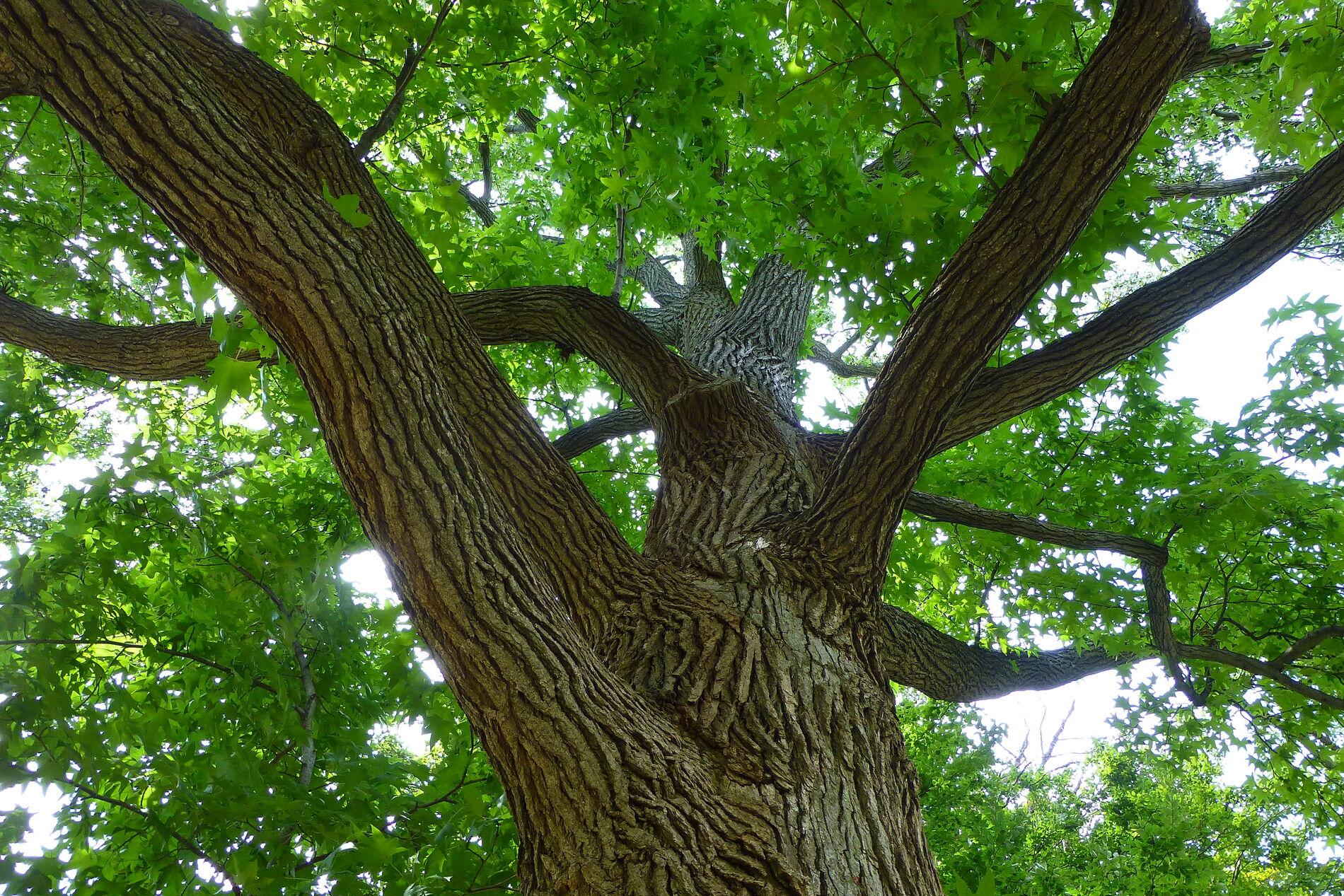 Oakensheildtheme
