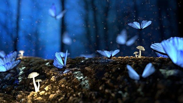 Butterfly-2049567 340