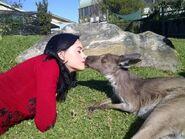 Kangaroo-kiss