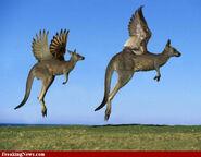 Flying-kangaroos-72074