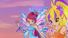Bloom e stella sirenix 517