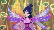 Musa bloomix in 605