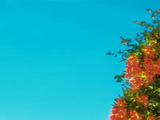 Tree of Life (Winx Club)