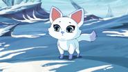 Sapphire fox.jpg