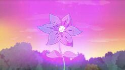 A lila máxica