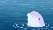 Dolphin s5 2