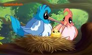 Птицы в Райской бухте