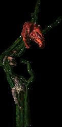 Bestiary Echinops full