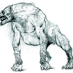 A sketch of the lykanthrope from which the werewolf was ultimately derived