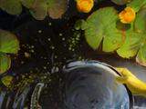 Water of Brokilon