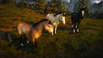 Domesticated horses near Novigrad