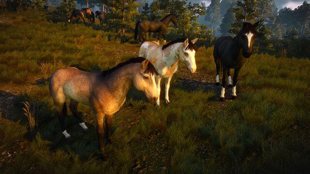 File:Domesticated horses near Novigrad.jpg