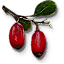 Tw3 berbercane fruit