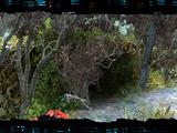 Swamp cave