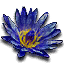 Tw3 blue lotus
