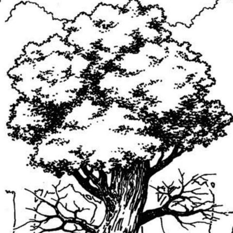 Дубостворіння у грі «Wiedźmin: Gra Wyobraźni»
