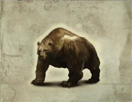 Bear in TWAG