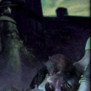 Rats eating plague's victim