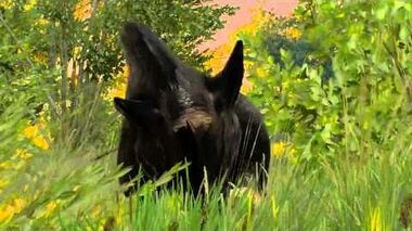 The Witcher 3- Boar ambush