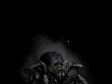 Arachnomorph
